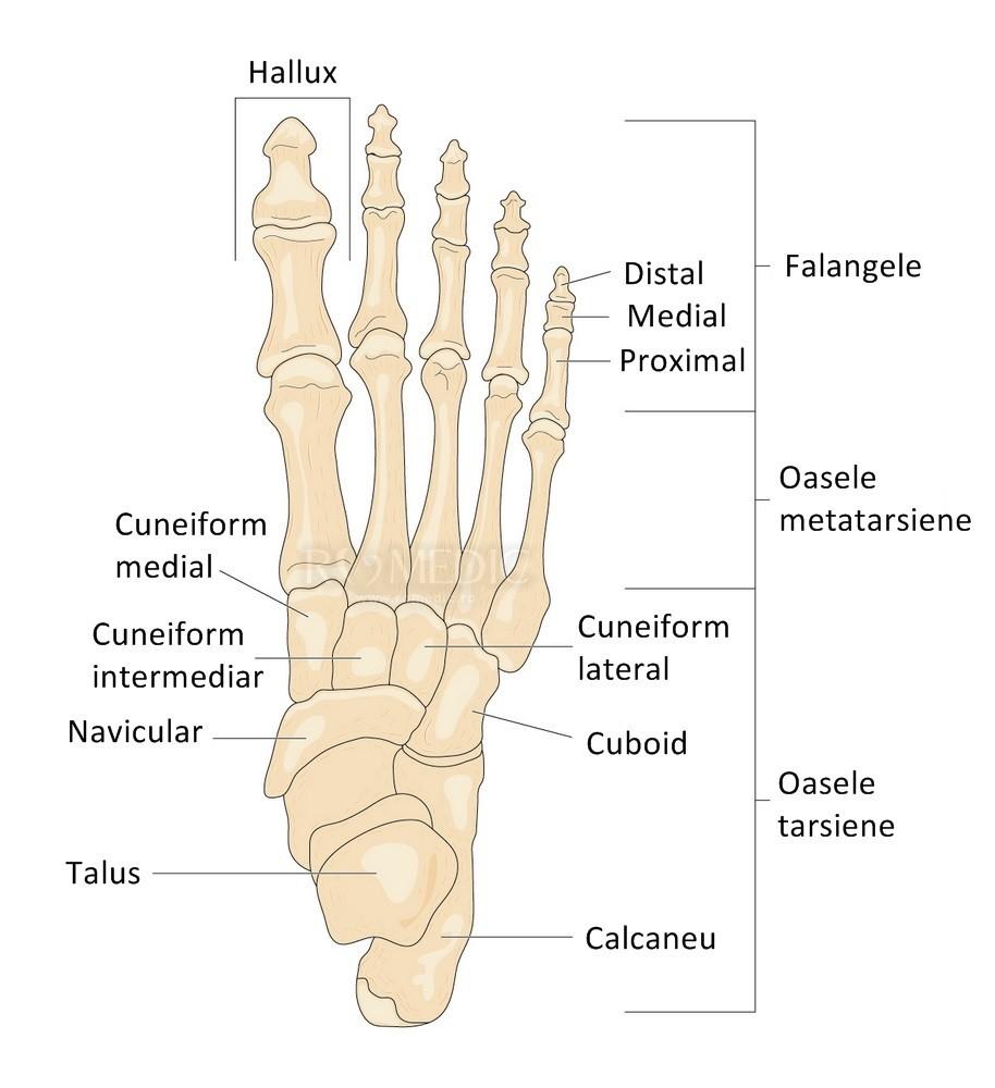 Tars - durere la nivelul articulațiilor metatarsiene