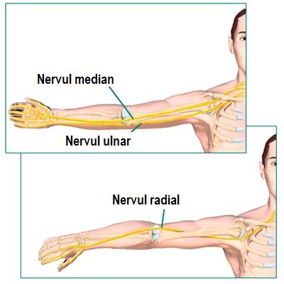 Articulațiile cotului doare în timpul extensiei