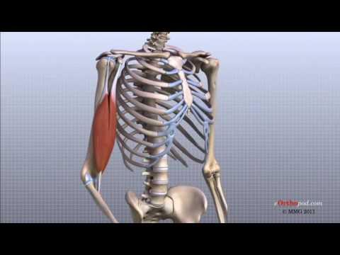 toate articulațiile pot răni cu anemie cum să tratezi artrita în brațe