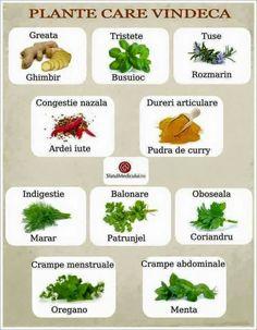 remedii pe bază de plante antiinflamatoare pentru osteochondroză