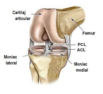 Articulatia genunchiului