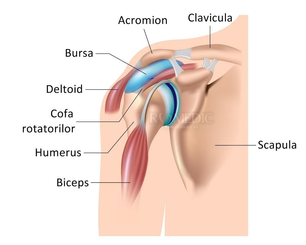 durere miofascială în articulația umărului