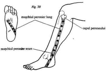 cum să tratezi articulațiile gambei căzut pe o mână doare o articulație