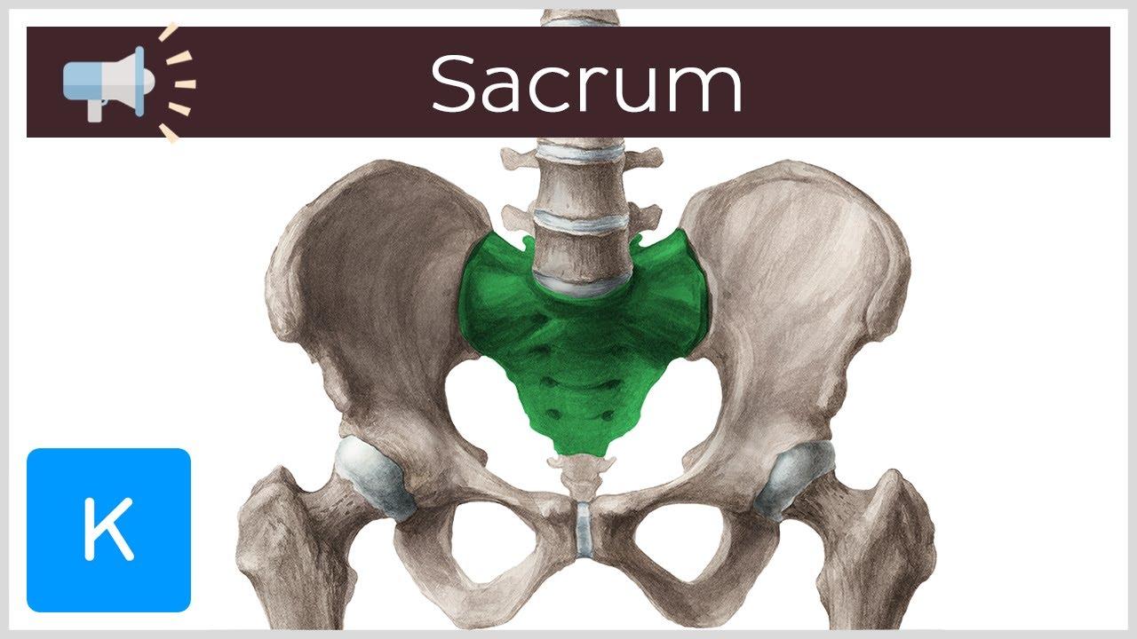dureri la genunchi la un adolescent cauzează tratamentul osteoartrozei deformante a genunchiului 1 grad