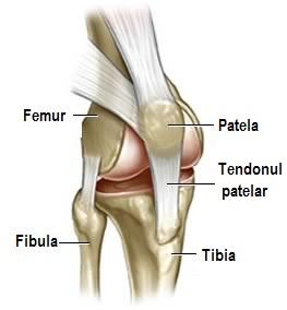 ungere în articulațiile genunchiului