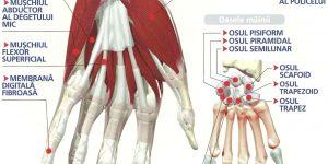 laser pentru dureri articulare lipsa articulațiilor dureri de somn