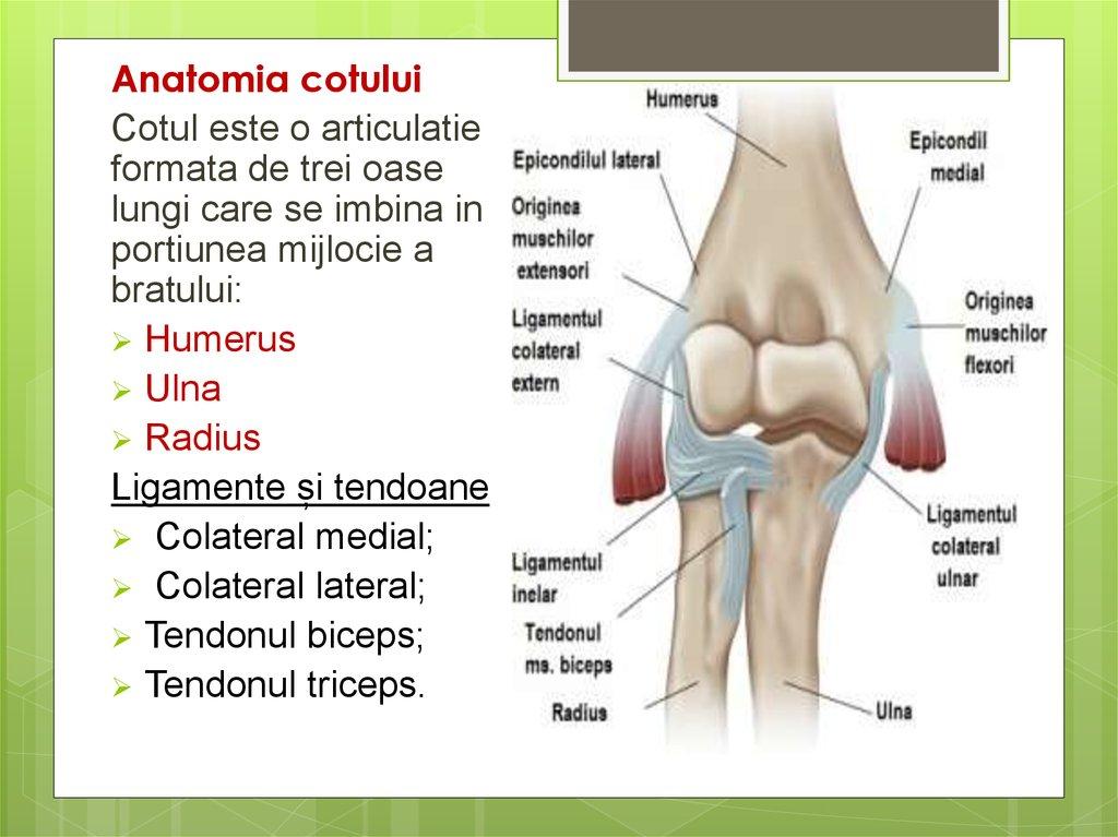 Articulația cotului decât pentru a trata - Inflamația articulațiilor cotului mâinilor