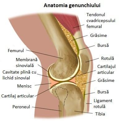regim de tratament pentru inflamația genunchiului unguent anestezic pentru artroza articulației gleznei