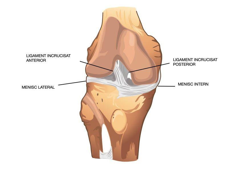 menisc al unguentului de genunchi