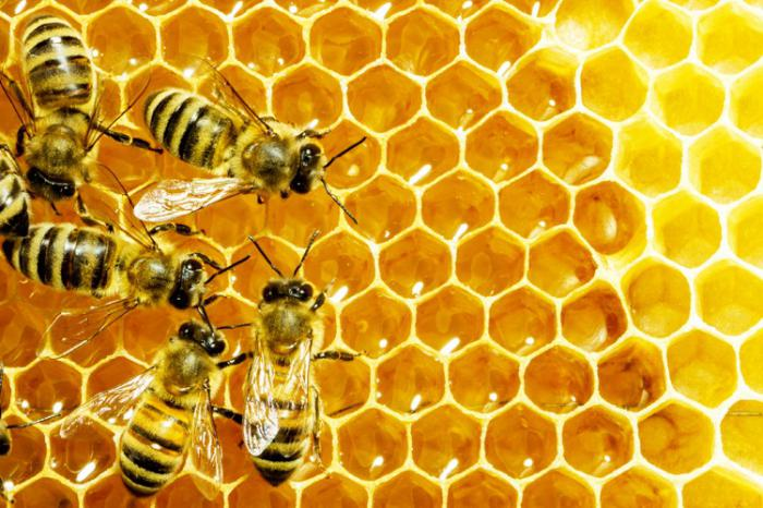 Venin de albine în tratamentul artrozei,