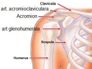 cum să tratezi o articulație pe umăr
