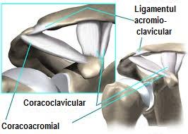 Durerea de umar, Durere în articulația claviculară a umărului