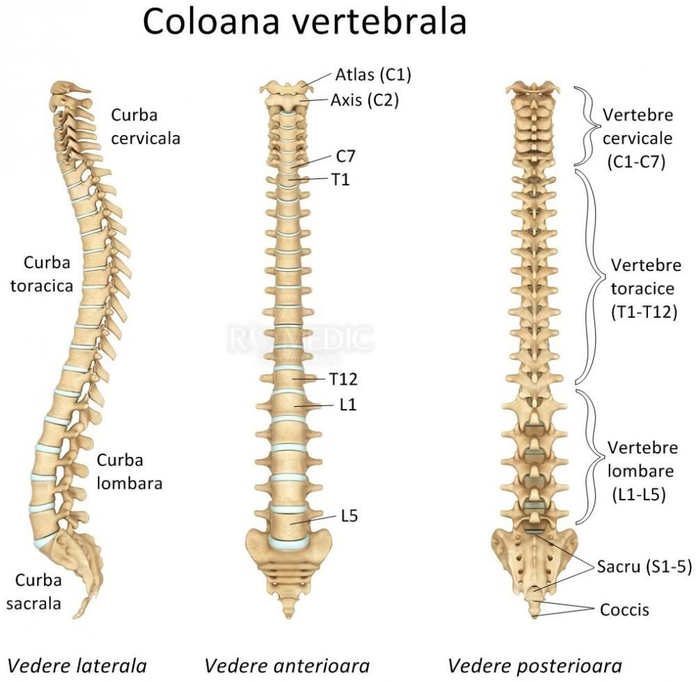 durere în articulația femurală dreaptă articulațiile de pe mână doare după muncă