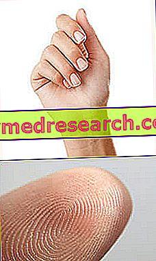 articulația degetului mare și arcul Meniscus al durerii genunchiului articulației genunchiului