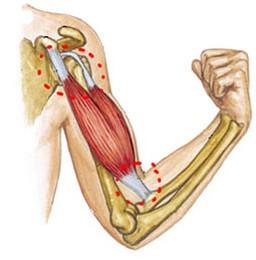 atrofia musculară a tratamentului articulațiilor umărului