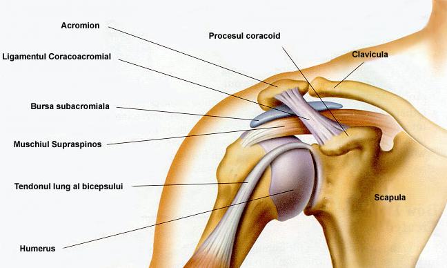 Crucearosies1 dureri la nivelul gâtului / umărului care trag bratul dureri sub brat