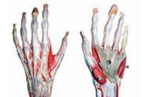 boala articulară a degetelor mâinii stângi durerile articulare ale mamelor care alăptează