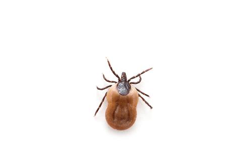 Alergia la veninul de albina si viespe | ipa-law.ro