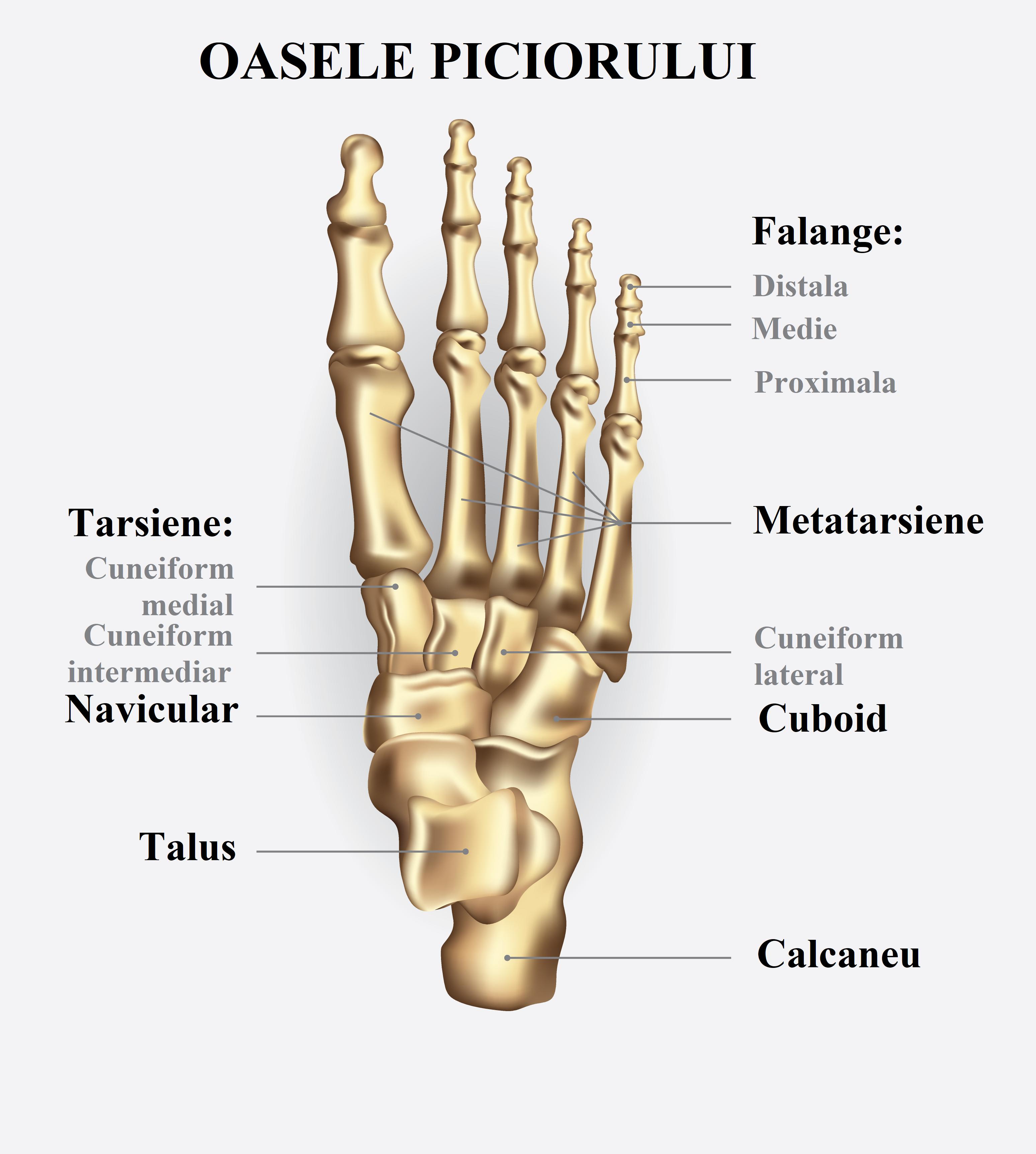articulațiile piciorului capsulei