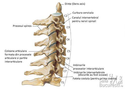 Artroza articulațiilor intervertebrale ale gâtului. Meniu cont utilizator