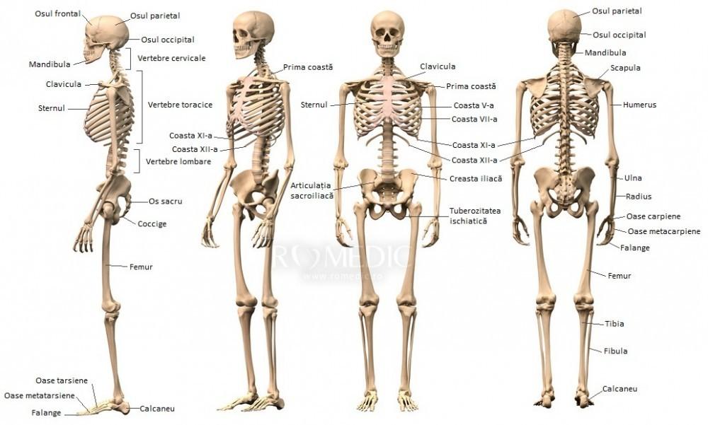 dacă durerea în articulația șoldului ce trebuie făcut aparat de durere articular