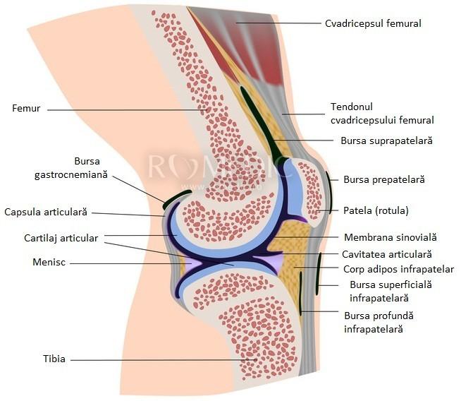 boli ale ligamentelor și tendoanelor articulației genunchiului poate apărea durere articulară