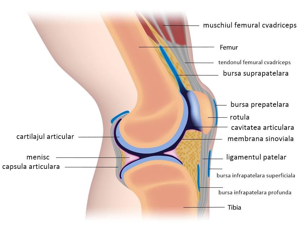 cum arată articulația cu artroza