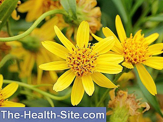 Homeopatie cum se tratează articulațiile. Urmăreşte cel mai nou VIDEO încărcat pe unica.ro