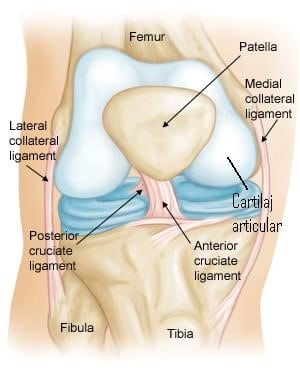 remediu pentru artrita genunchiului tratamentul ligamentelor și articulațiilor sportivilor