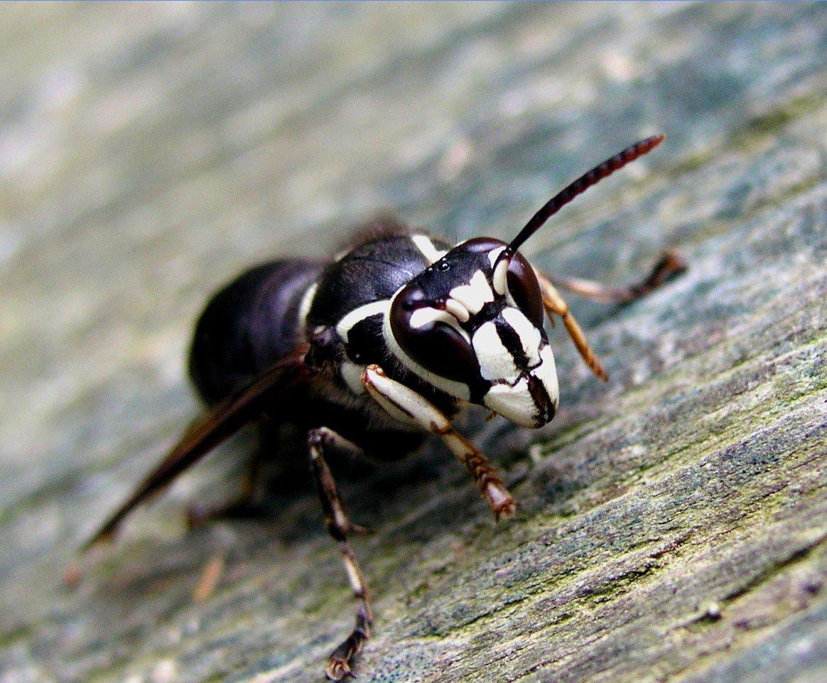 Muşcătură de muscă sau de furnică? Cum îţi poţi da seama