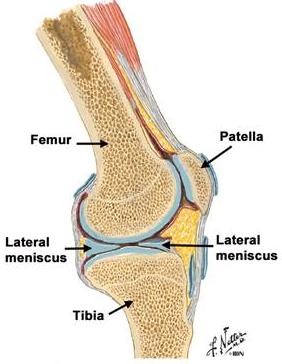 Tipuri de leziuni osoase și articulare. Osteoartrita și degradarea cartilajului articular | Wavita
