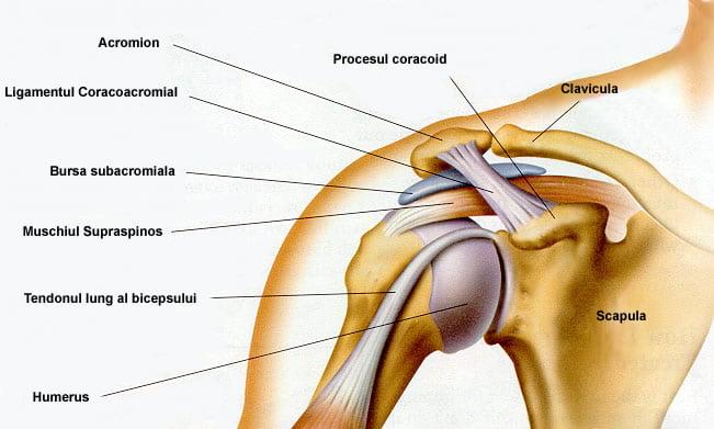 Unguent din nervul ciupit în articulația umărului.