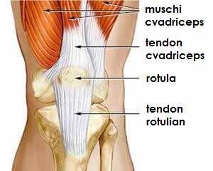 leziuni ale rotilei genunchiului