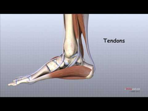 poate vindeca artroza articulației gleznei