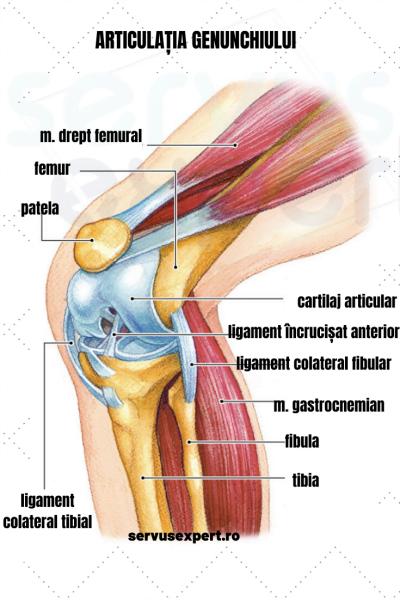 articulațiile sub genunchi chiar doare