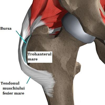 Alergarea și durerile de șold | Centrul Medical Superfit