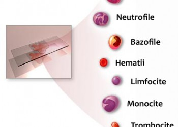 Injecții de aloe pentru durerile articulare durere pe articulația degetului mare